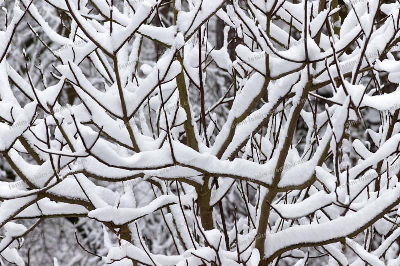 arbres sous la neige dans mon jardin