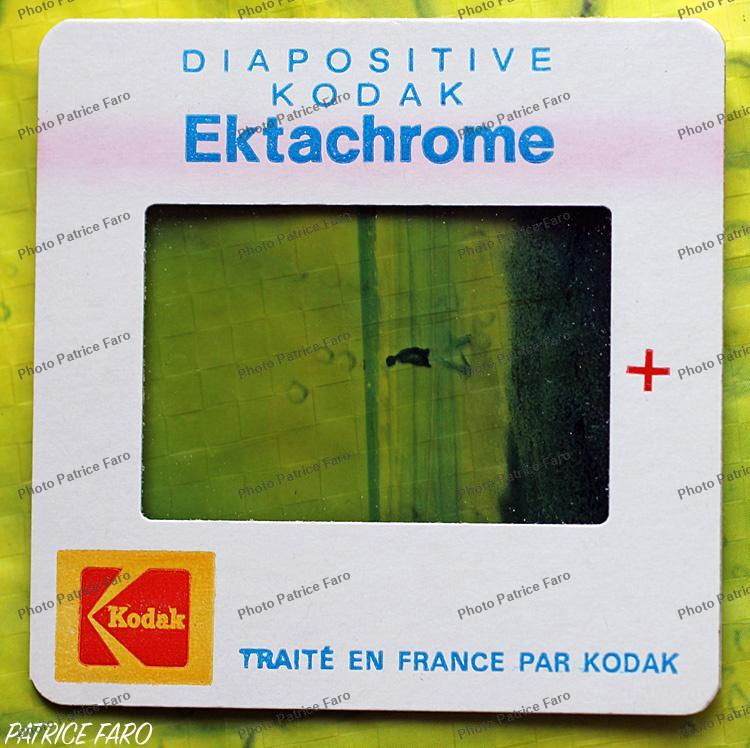 Ektachrome Kodak  - Photo Patrice Faro