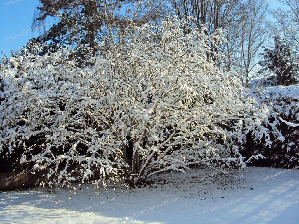 île-de-France sous la neige