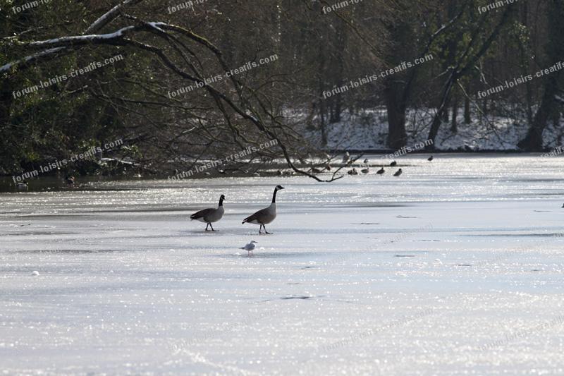 Promenade des oiseaux sur lac gelé