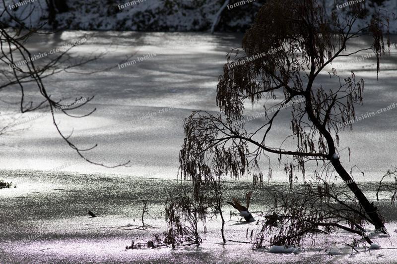 Bois de Vincennes paysage sous la neige
